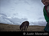 ® Justin Merendith