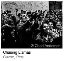 Chasing Llamas_Chad Anderson
