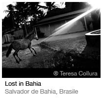 ® Teresa Collura