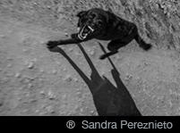 ® Sandra Pereznieto