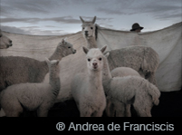 ® Andrea de Franciscis